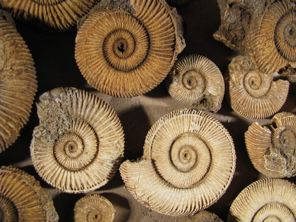 Ammoniten von Schlaifhausen