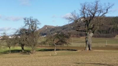 Naturdenkmal