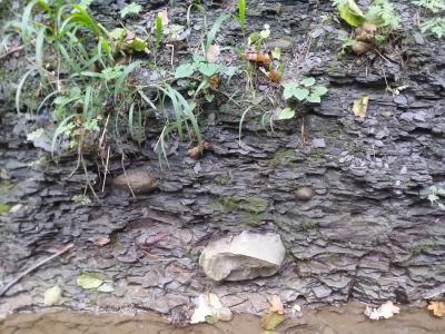 Geoden im Amaltheenton