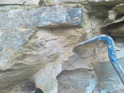 Ammonitenquerschnitt
